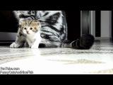 Новогодняя нарезка с котятами